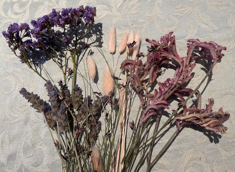 An assortment of dried flowers, from the left Perezii Blue, Lavender, dyed Bunny Tails, Pink Kangaroo Paw, Tiny flowers with long skinny stems from the Whirling Pink Butterfly Bush.