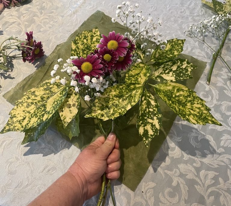 Aucuba Japonica leaves positioned on a piece of floral paper then added Baby's breath then the pink Chrysanthemums. Hold the bouquet and bring corners of the paper together and tie all together with ribbon.