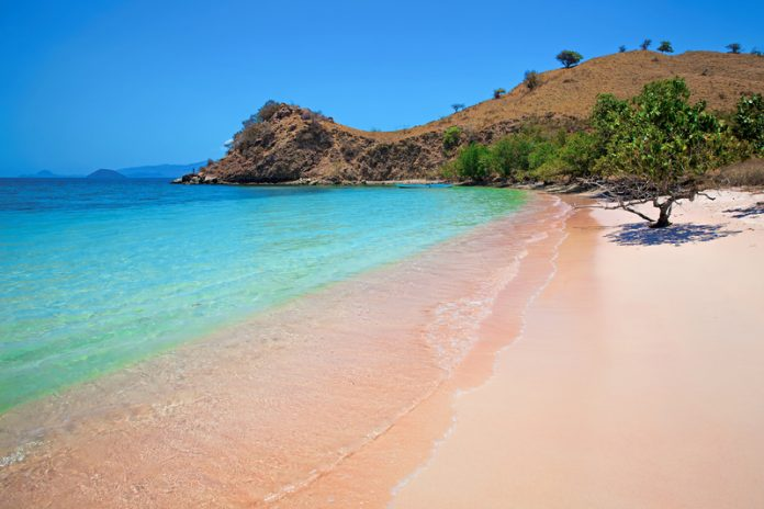 The Pink Beach of Indonesia.