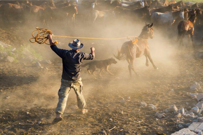 yilki wild horses