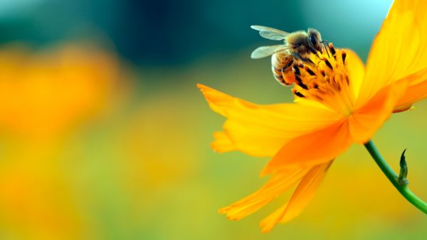 Friend or foe: Even the good things in life like bees and pollen can spoil your summer and cause severe allergies.