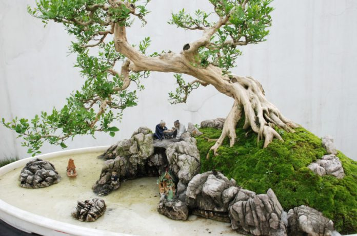 A curry tree bonsai composition with a Chinese mini-scape including rocks and ceramic figurines.