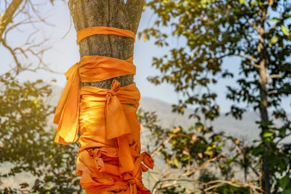 orange robes tied around the trunk of a tree