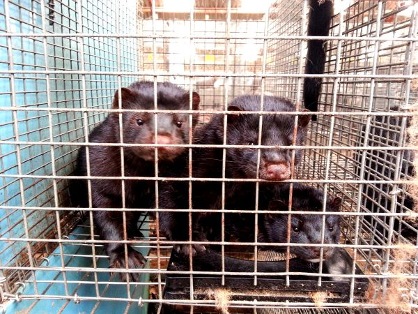 There is a major movement to ban the fur trade around the world.