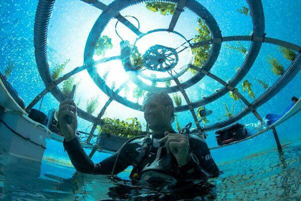 underwater_garden