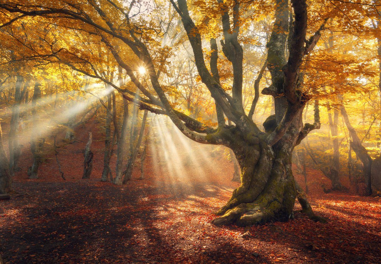autumn_tree
