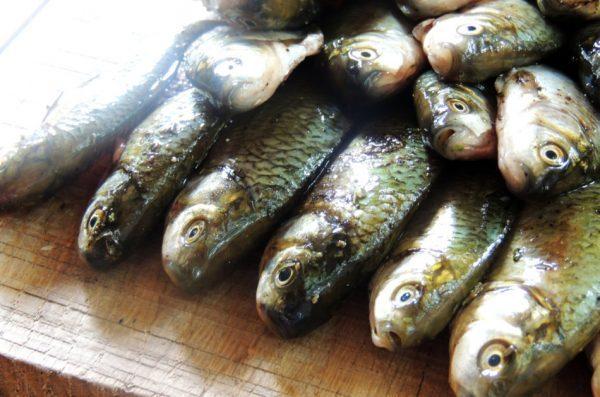 Fresh raw fish on a board.