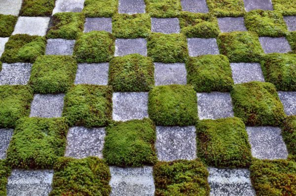 Using stepping stones when growing a moss garden to reduce footfall.