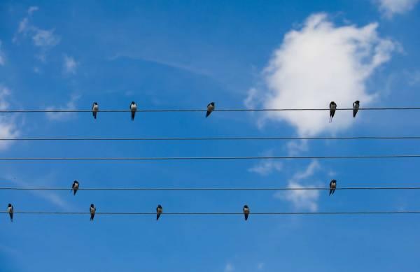 Songbirds stay in sync through a form of telepathy.