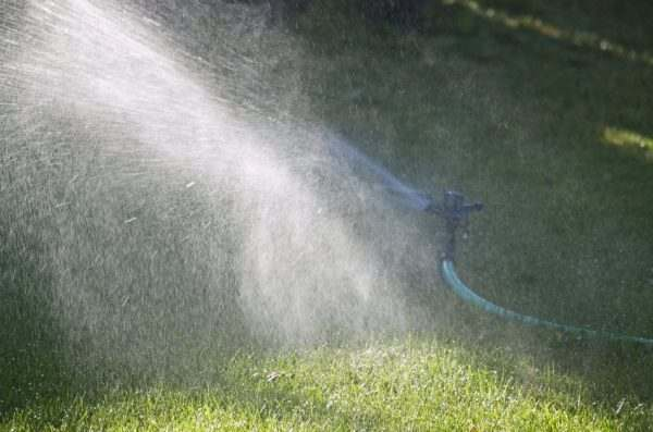 Hose and sprinkler being used to water the backyard.