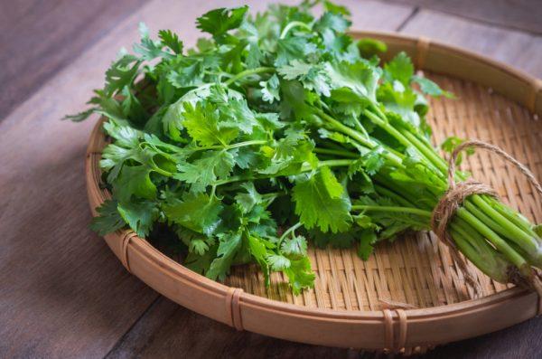 Fresh cilantro sitting on a wicker basket.