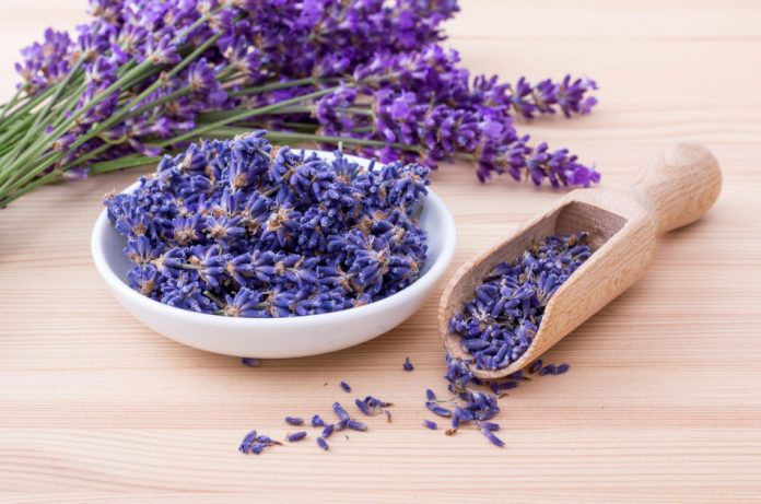 A bunch of fresh-cut lavender sits next to a dish filled with lavender flowers on a wooden surface.