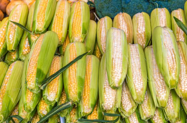 Yellow and white corn sitting out at a vegetable market.